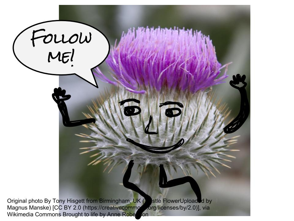 a thistle with arms and legs and a face running away saying follow me