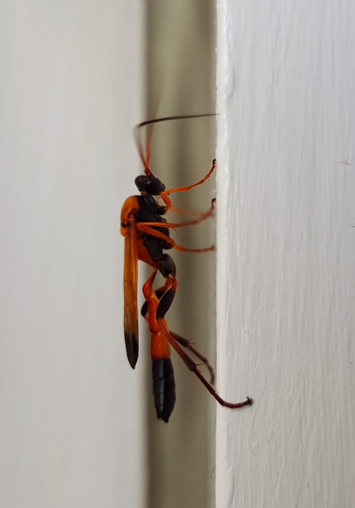 red insect on a white door