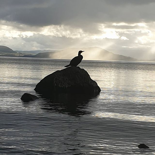 a shag sits on a rock in a lake. Shafts of evening sunlight fall onto the lake from the clouds behind him.