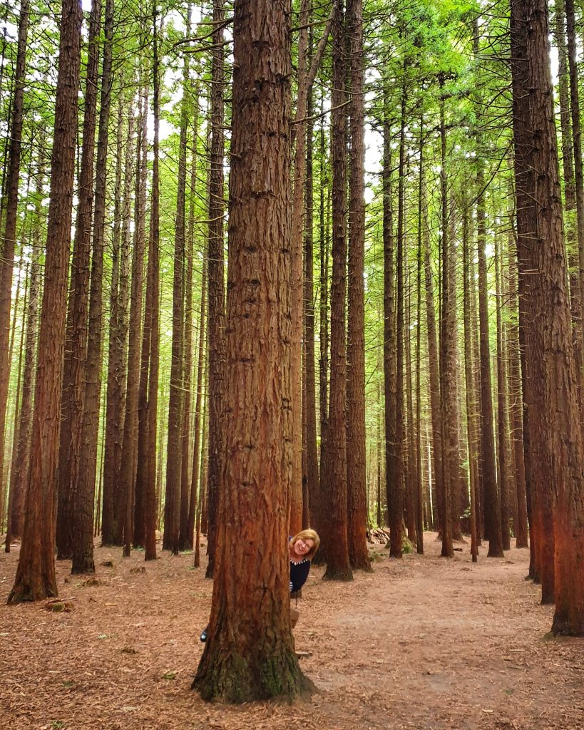 tall, straight trees rise from a pine needle strewn forest floor. A woman peeps out from behind one of the tree trunks