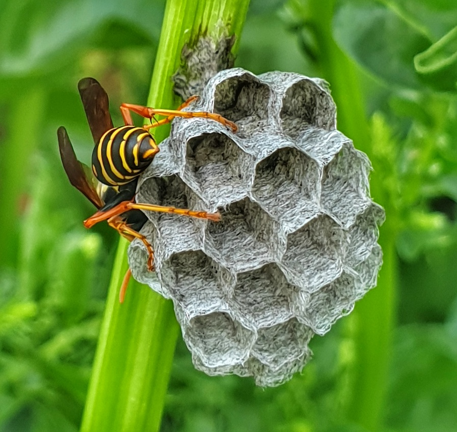 a wasps nest with a wasp in it